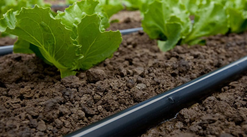 A-Complete-Guide-To-Drip-Irrigation