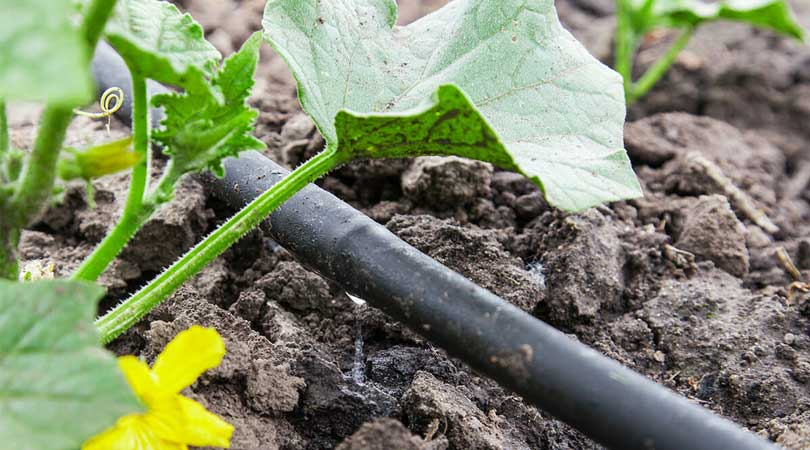 A-History-Of-Drip-Irrigation
