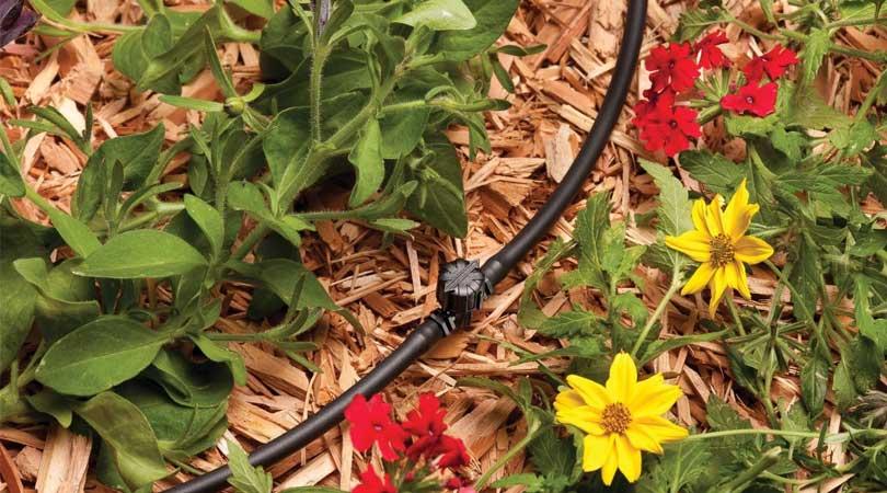 Irrigation and Landscape Lighting Blog & Company News
