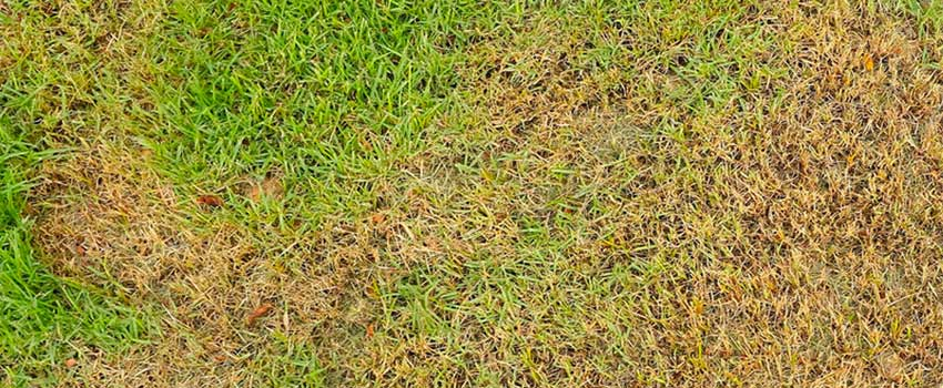 Overwatering-Your-Lawn
